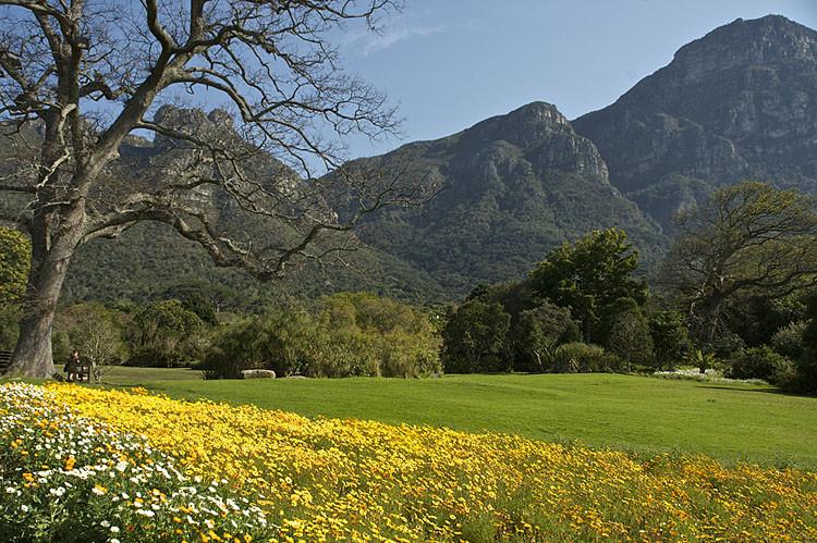 Botanischer Garten, Kirstenbosch, Kapstadt, Tagestour
