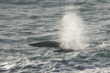 Walker Bay, Wale, Tagestour