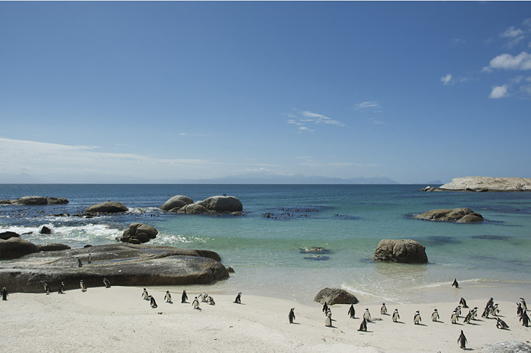 Pinguinkolonie Boulders , Simonstown, Kaphalbinsel, Tagestour, Pinguine